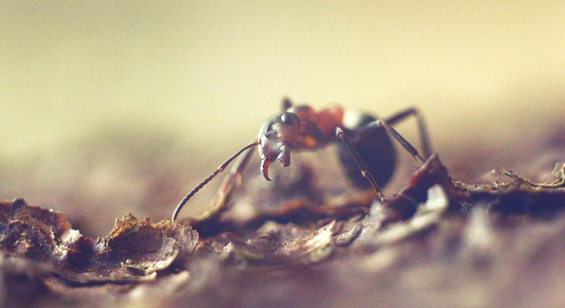 Helios 44M-4+macro tube, ant, макрофото муравей