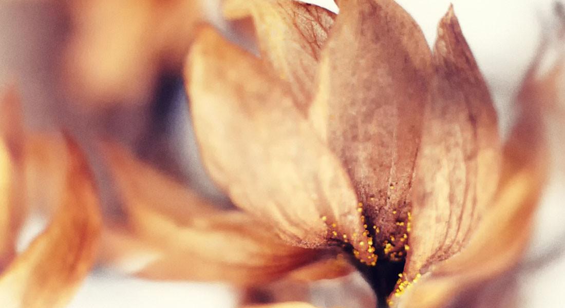 Helios 44M-4+macro tube  цветок хмеля, макрофото